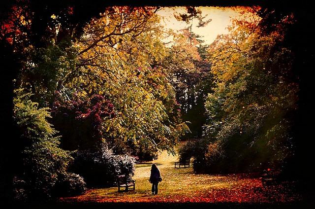 Rhiannon Hall_Garden